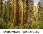 giant sequoia forest  redwoods  ... | Shutterstock . vector #1058298659