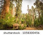 giant sequoias  redwoods ... | Shutterstock . vector #1058300456