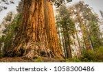 giant sequoias  redwoods  | Shutterstock . vector #1058300486