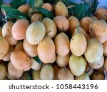 Pile Of Plum Mango  Fresh...