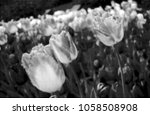 halftone dots effect digitally... | Shutterstock .eps vector #1058508908