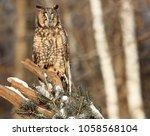 Portrait Of A Long Eared Owl...