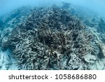 bleach and dead coral reefs of... | Shutterstock . vector #1058686880
