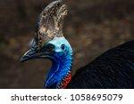 cassowary bird close up face | Shutterstock . vector #1058695079
