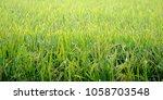 a paddy feild | Shutterstock . vector #1058703548