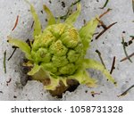 Small photo of Arousal of spring: bud in ice