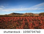scenic landscape with flowering ... | Shutterstock . vector #1058734760