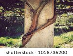 Small photo of tree roots bind on the concrete wall fence pillar for long time