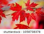 branch with red maple leaves.... | Shutterstock . vector #1058738378