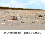 close up sea shell on the sand... | Shutterstock . vector #1058742590