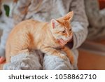 red haired kitten in the hands... | Shutterstock . vector #1058862710