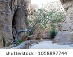 Tree In The Siq Growing Out Of...