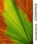 autumn palm leaf texture | Shutterstock . vector #1058899058