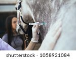 vet giving injection to a horse.... | Shutterstock . vector #1058921084
