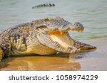 Crocodile In The Farm Is Eatin...