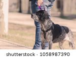 hunting dog looking for... | Shutterstock . vector #1058987390