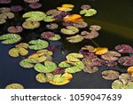 a lily pond. | Shutterstock . vector #1059047639