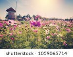 field cosmos flowre and sunset... | Shutterstock . vector #1059065714