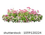 flower bush tree isolated with... | Shutterstock . vector #1059120224