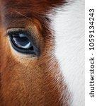 Stock photo eye of a beautiful red horse closeup 1059134243