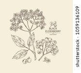 elderberry black  branch of... | Shutterstock .eps vector #1059136109
