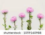 Row Of Pink Chrysanthemums Is...