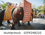 Small photo of Indian elephants with gold plated caparison standing for parade on festival in Ernakulam temple for the traditional ceremony Kerala, India - 06 JAN 2018
