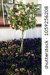 Small photo of Oink rose tree and colorful flowers