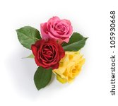 Three Fresh Colorful Roses On...