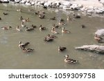Ducks Having Fun In The Pond