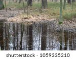 Swamp Forest In Poland Europe