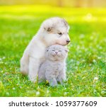 Stock photo little puppy with kitten on summer green grass 1059377609