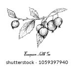 berry fruits  illustration of... | Shutterstock .eps vector #1059397940