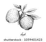 exotic fruit  illustration hand ... | Shutterstock .eps vector #1059401423