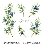 watercolor set plants juniper... | Shutterstock . vector #1059423566