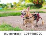 happy cute little dog in... | Shutterstock . vector #1059488720