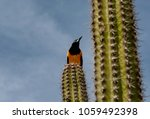 image of the colorful bird the... | Shutterstock . vector #1059492398
