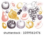 vintage fruits and berries  ... | Shutterstock .eps vector #1059561476
