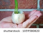 protect nature and nurturing... | Shutterstock . vector #1059580820