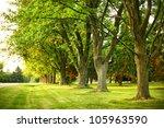 Giant Oak Trees In A Suburban...