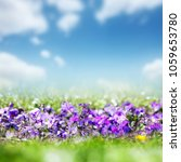 blooming violet flowers and...   Shutterstock . vector #1059653780