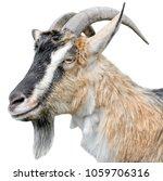goat portrait close up.... | Shutterstock . vector #1059706316