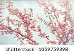 spring blossom delicate pink... | Shutterstock . vector #1059759398