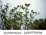 flowers in historical sites in... | Shutterstock . vector #1059770936