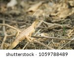 chameleon lizard in nature... | Shutterstock . vector #1059788489