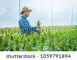 farmer inspecting hydroponic... | Shutterstock . vector #1059791894
