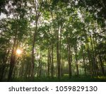 burmese ebony tree forest in... | Shutterstock . vector #1059829130