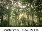 burmese ebony tree forest in... | Shutterstock . vector #1059829148