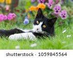 A Cute Cat  Tuxedo Pattern...