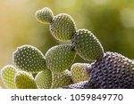 cactus of the exotic garden of... | Shutterstock . vector #1059849770